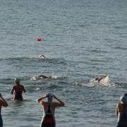 open water swimming brisbane