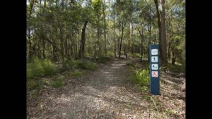 RUN - trails @ Toohey Forest Picnic Area