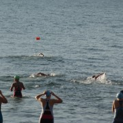 open water swimming brisbane